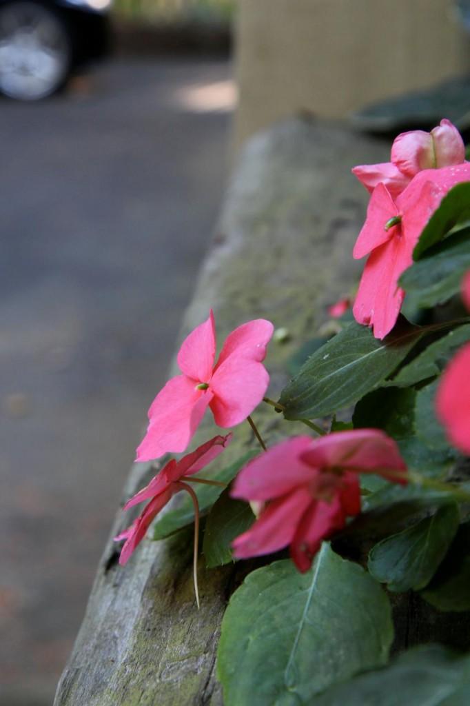 flower driveway
