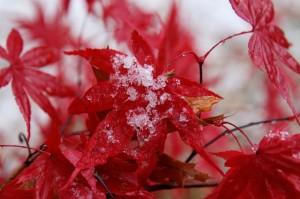 snow leaves4
