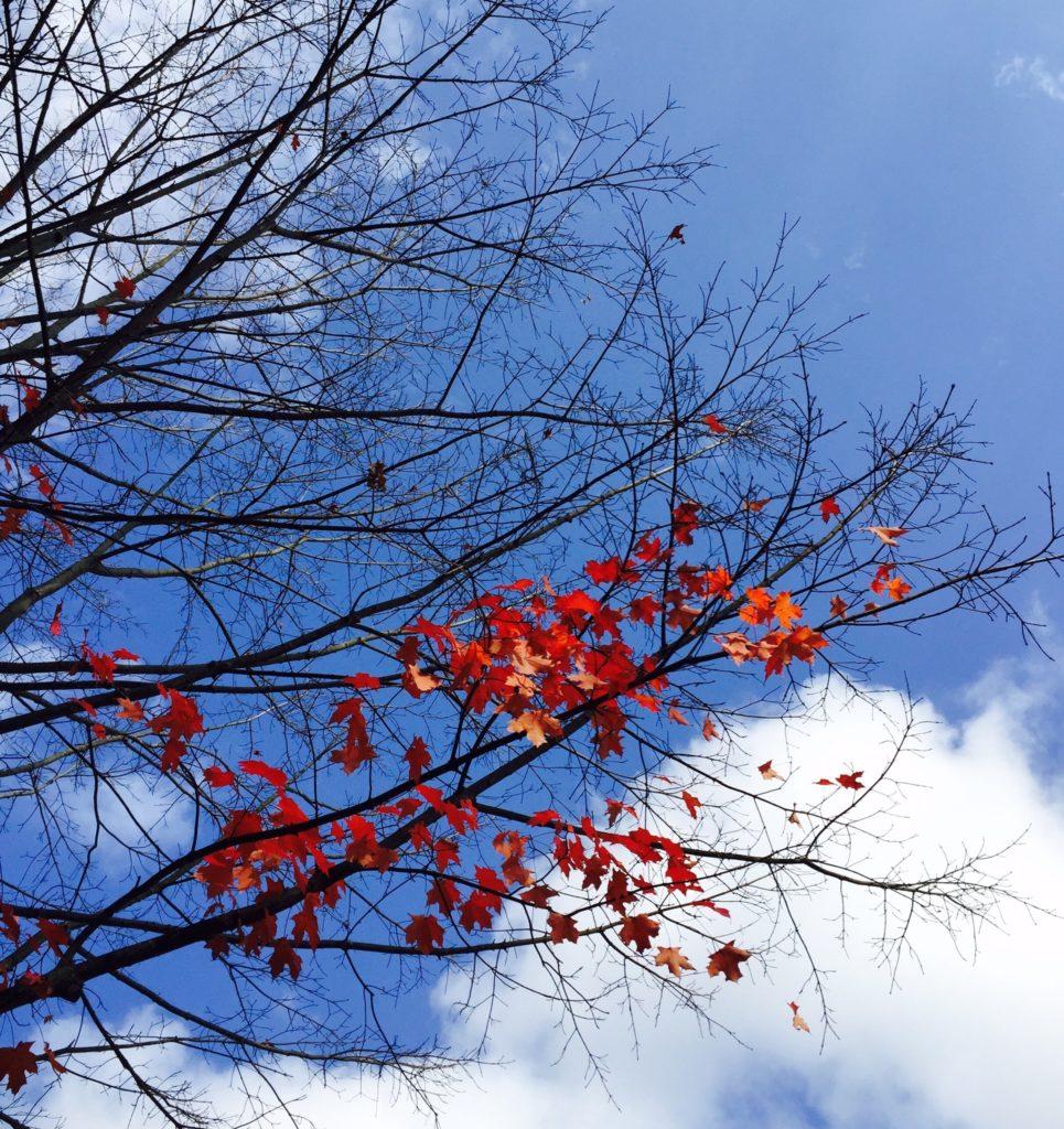 fall-ch2-10